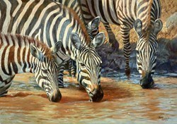 Zebras Drinking by Tony Forrest -  sized 23x17 inches. Available from Whitewall Galleries